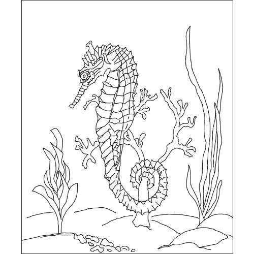 Michele Micarelli Seahorse Rug Hooking Pattern